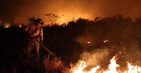 Placeholder - loading - Maior presença de gado poderia ter minimizado queimadas no Pantanal, diz Tereza Cristina