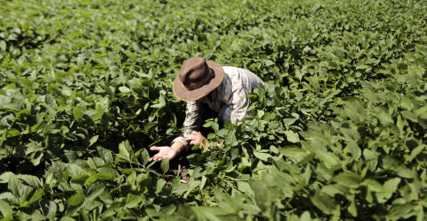 Placeholder - loading - Imagem da notícia Plantio de soja do Brasil atinge 3,4% da área, diz AgRural; maior atraso em 10 anos