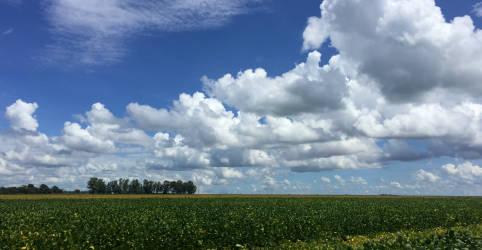 Placeholder - loading - Imagem da notícia Safras vê replantio de soja por seca no Brasil e amplo atraso