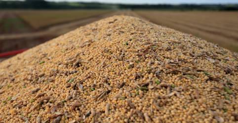 Placeholder - loading - Imagem da notícia Tardia, colheita de soja do Brasil pode estar 70% vendida quando começar, diz StoneX