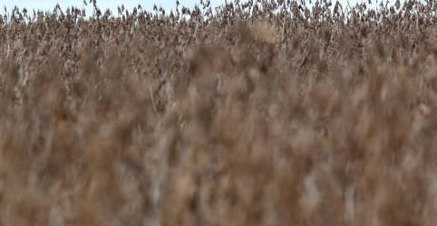 Placeholder - loading - Imagem da notícia ENTREVISTA-SLC vê alto potencial para safra 20/21 apesar de atraso no plantio da soja