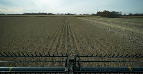 Placeholder - loading - Imagem da notícia Brasil facilita importação de grãos transgênicos dos EUA; foco agora é custo