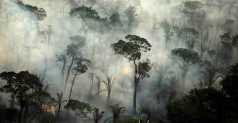 Placeholder - loading - Desmatamento na Amazônia elevou emissões de carbono do Brasil em 9,6% em 2019, diz estudo