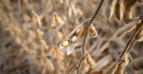 Placeholder - loading - Imagem da notícia Importação chinesa de soja em outubro dispara com aumento de cargas do Brasil e EUA