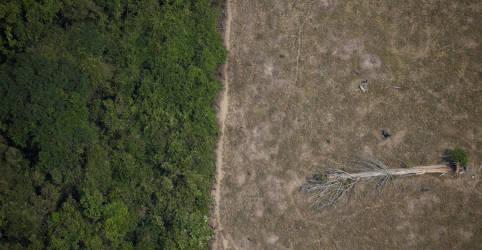 Placeholder - loading - Imagem da notícia Brasil tem maior índice de desmatamento na Amazônia em 12 anos