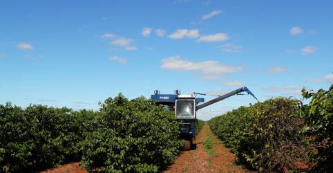 Placeholder - loading - Exportação de café verde do Brasil tem recorde em novembro
