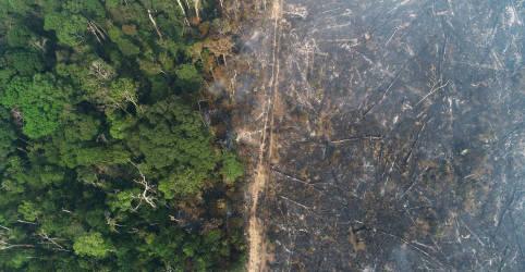 Placeholder - loading - Desmatamento na Amazônia tem queda de 45% em novembro, diz Defesa