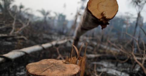 Placeholder - loading - Imagem da notícia Garimpo e outras atividades ilegais põem quase 1/3 da Amazônia sob risco
