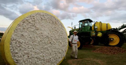 Placeholder - loading - Imagem da notícia ENFOQUE-Com ou sem crise, boom de IPOs do agronegócio brasileiro deve continuar