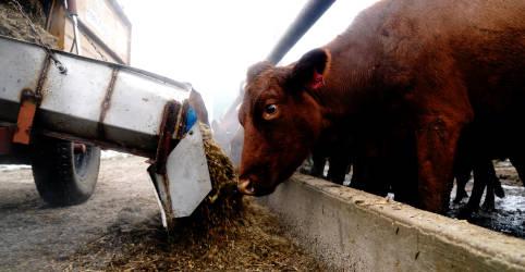 Placeholder - loading - Imagem da notícia Embarque de carne do país supera 2 mi t pela 1ª vez, Abiec vê novo recorde em 2021