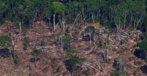 Placeholder - loading - Coronavírus não detém madeireiros e desmatamento no Brasil aumenta