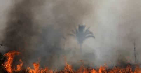 Placeholder - loading - Governo federal proíbe queimadas por 120 dias