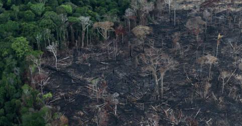 Placeholder - loading - Imagem da notícia CORREÇÃO-Desmatamento da Amazônia cai em julho, mas sobe em 12 meses