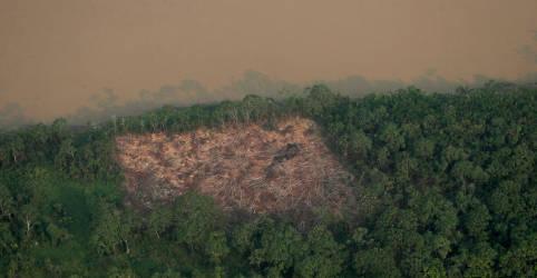 Placeholder - loading - Desmatamento da Amazônia cai em julho, mas sobe em 12 meses