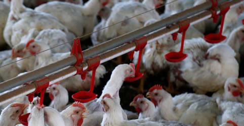 Placeholder - loading - Imagem da notícia Filipinas proíbem frango do Brasil por medo de coronavírus; ABPA não foi notificada
