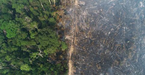 Placeholder - loading - Imagem da notícia Biomas brasileiros perderam equivalente a uma Espanha de cobertura natural entre 2000 e 2018, diz IBGE