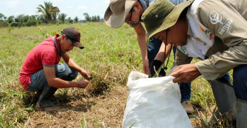 Placeholder - loading - ESPECIAL-Com facões e encharcados de suor, pesquisadores contam o carbono na Amazônia