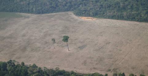 Placeholder - loading - Imagem da notícia Desmatamento aumenta, mas multas ambientais no país caem 20%