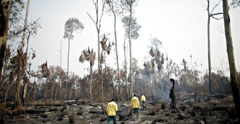 Placeholder - loading - Imagem da notícia Brasil prepara terreno para emissões externas ESG em meio a críticas sobre política ambiental