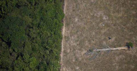 Placeholder - loading - Imagem da notícia Desmatamento da Amazônia cai 70% em janeiro; ambientalistas citam aumento de chuvas