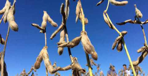 Placeholder - loading - Colheita de soja no Brasil avança 'bem' para 9% da área, diz AgRural