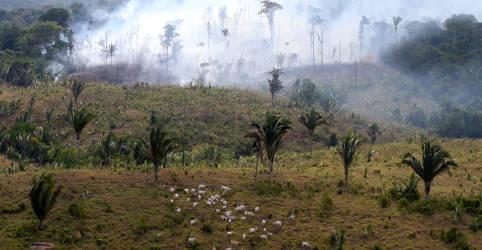 Placeholder - loading - Imagem da notícia BNP não financiará mais empresas que exploram terras desmatadas da Amazônia