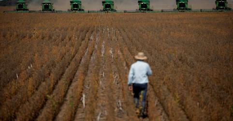 Placeholder - loading - Imagem da notícia Agronegócio cresce 24,3% em 2020 e responde por mais de 1/4 do PIB do Brasil, diz CNA