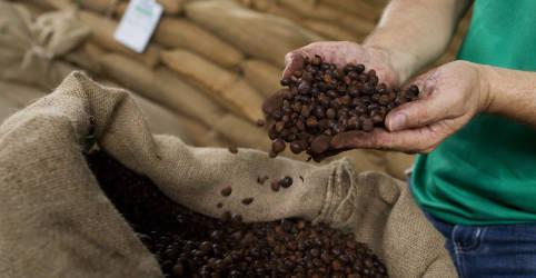 Placeholder - loading - Operação 'Expresso' contra sonegação no setor de café estima fraudes de mais de R$1 bi