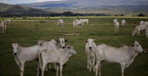 Placeholder - loading - Imagem da notícia Abate de bovinos no Brasil recua 8,5% em 2020 após três anos de alta, diz IBGE