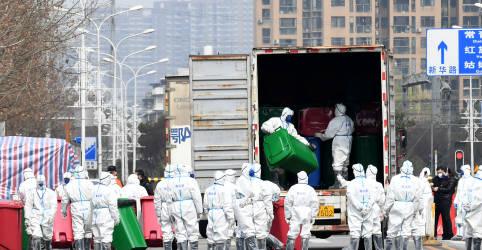 Placeholder - loading - Imagem da notícia OMS e agências pedem suspensão de comércio de mamíferos selvagens em mercados de alimentos