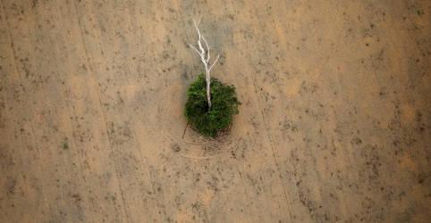 Placeholder - loading - Imagem da notícia DiCaprio, Gil e outras celebridades pedem a Biden que recuse acordo ambiental com Brasil