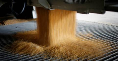 Placeholder - loading - Imagem da notícia Brasil pode comprar milho de EUA e Ucrânia após isenção de tarifa, diz ABPA