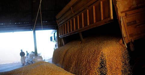 Placeholder - loading - Imagem da notícia Conab corta previsão de safra de milho do Brasil 2020/21, mas vê oferta suficiente