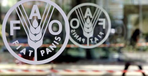 Placeholder - loading - Imagem da notícia Preços dos alimentos no mundo caem pelo segundo mês em julho, diz FAO