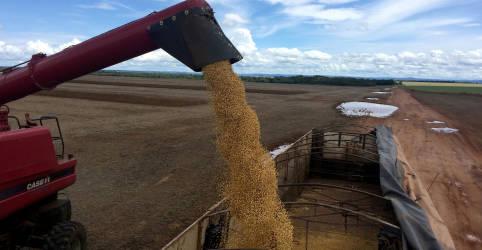 Placeholder - loading - Imagem da notícia Sojicultor do Brasil segura produto em aposta na alta de preços