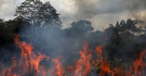 Placeholder - loading - Imagem da notícia Incêndios voltam a crescer na Amazônia com desmatamento da floresta