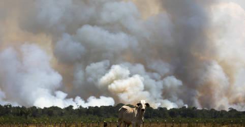 Placeholder - loading - Desmatamento na Amazônia cai pelo 2º mês, mas continua alto