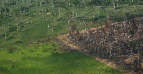 Placeholder - loading - Desmatamento e aquecimento global colocam sob ameaça natureza, economia e vida na Amazônia