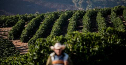 Placeholder - loading - Nestlé apoiará café e cacau do Brasil com prêmios por sustentabilidade
