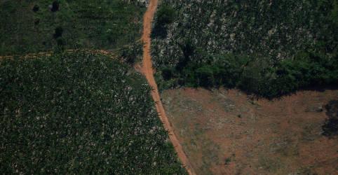 Placeholder - loading - Embaixador da Noruega diz que Brasil precisa de plano para combater desmatamento
