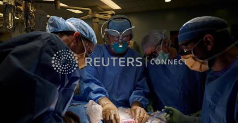 Placeholder - loading - Imagem da notícia Cirurgiões dos EUA testam com sucesso transplante de rim de porco em humano