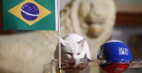 Placeholder - loading - Gato vidente russo prevê vitória do Brasil contra a Costa Rica