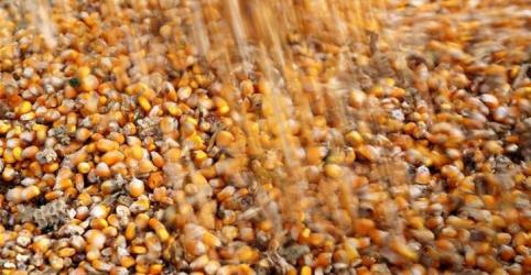 Placeholder - loading - Imagem da notícia Conab corta previsão de safra de milho 2017/18 do Brasil, vê exportação menor