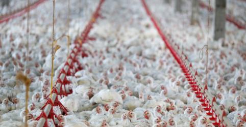 Placeholder - loading - Brasil vai avaliar consulta à OMC sobre restrições da China a carne de aves e açúcar