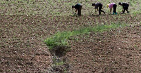 Cruz Vermelha alerta sobre risco de crise alimentar na Coreia do Norte devido a onda de calor