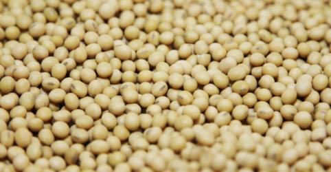 Placeholder - loading - Imagem da notícia USDA prevê safra recorde de soja nos EUA; eleva projeções para milho
