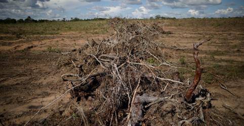 ESPECIAL-Demanda global por alimentos devora o Cerrado brasileiro