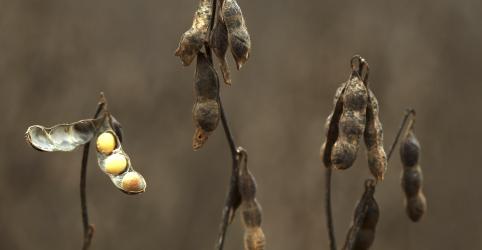 Placeholder - loading - Imagem da notícia Estoque de soja do Brasil tem mínima histórica com exportações recordes