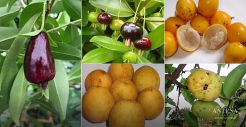 Placeholder - loading - Imagem da notícia Conheça as novas 'superfrutas'