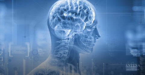 Inibir o sistema nervoso pode ajudar cardiopatas, aponta estudo